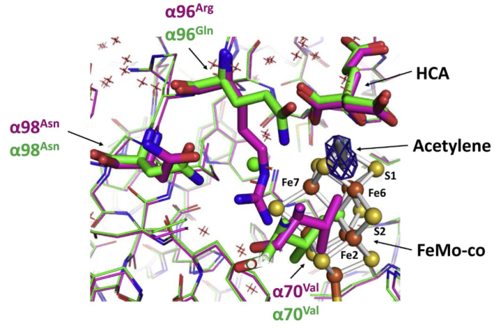 Differences at the acetylene binding site in the Arg96 to Gln variant and native molybdenum-iron (MoFe) proteins