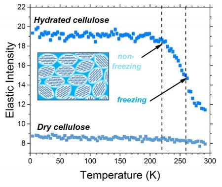 Elastic intensity scans of dry and hydrated cellulose