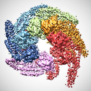 Protein Chaperones